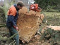 træfældning-ved-grønt-område