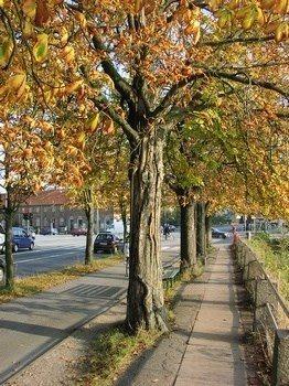 træskade om efteråret