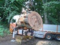 Træstamme kommer på lad