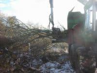 flishugning af små træer