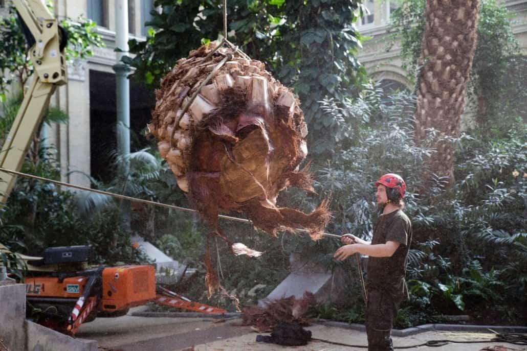 træflytning af palme glyptoteket