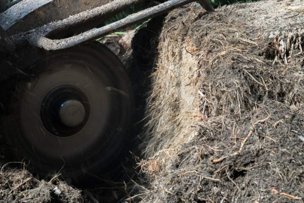 trærødder glyptoteket
