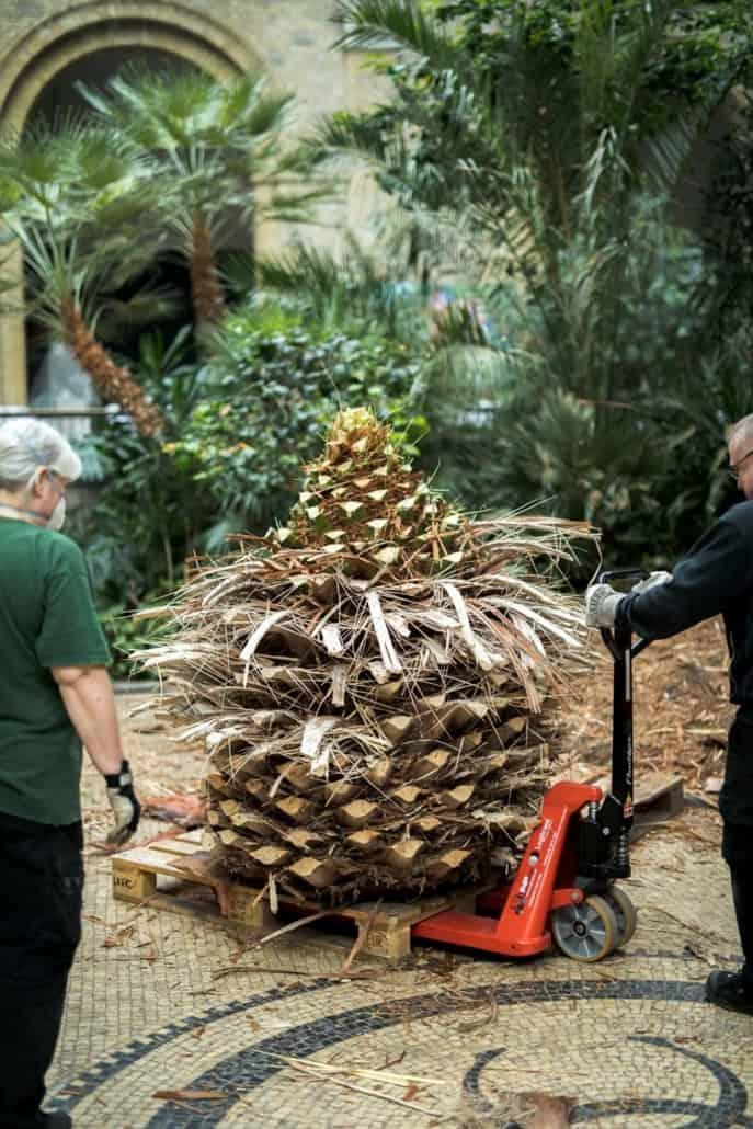træplantning glyptoteket