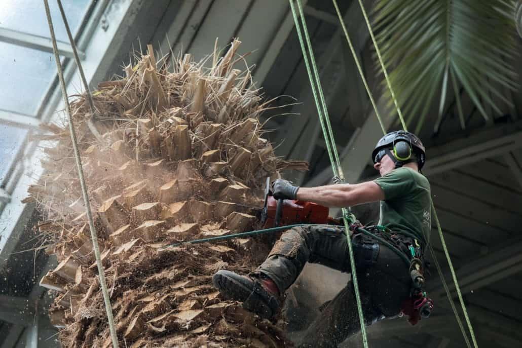træbeskæring-glyptoteket
