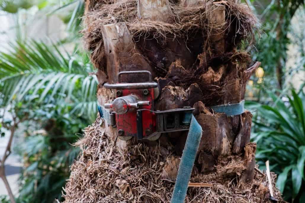 sikring af træ glyptoteket