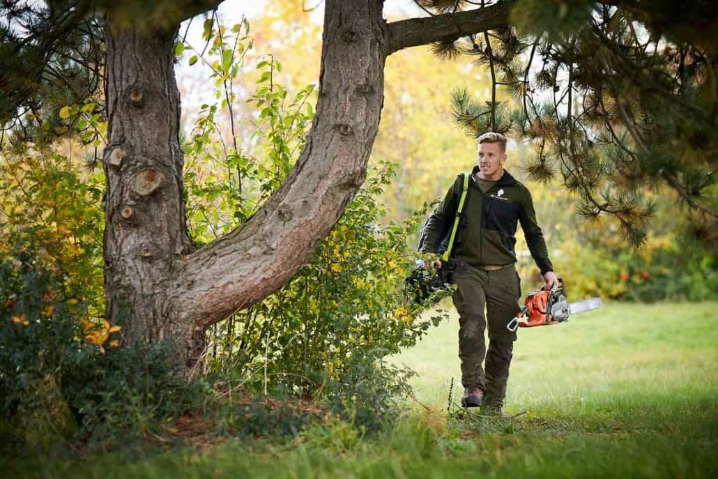 træbeskæring af deformt træ
