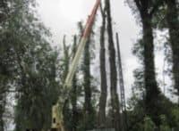 K&S tree Care vestre kirkegård