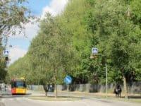 store træer ved vej