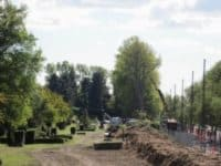 træbeskæring vestre kirkegård