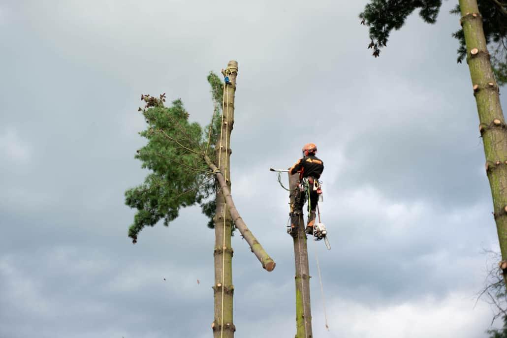 sikker træbeskæring