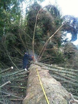 træbeskæring af fældet træ
