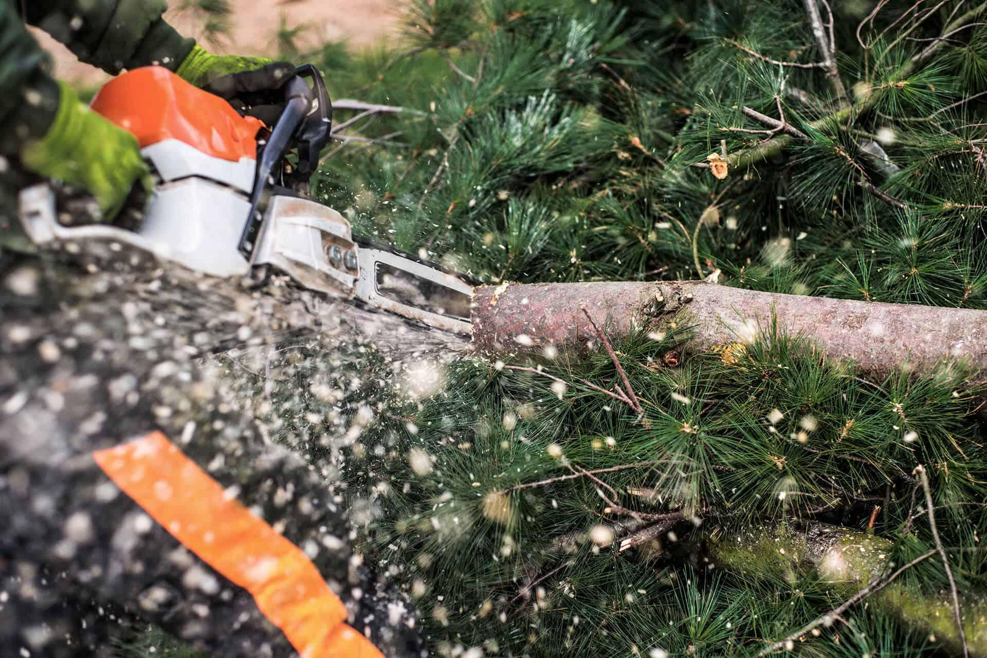 close up træbeskæring