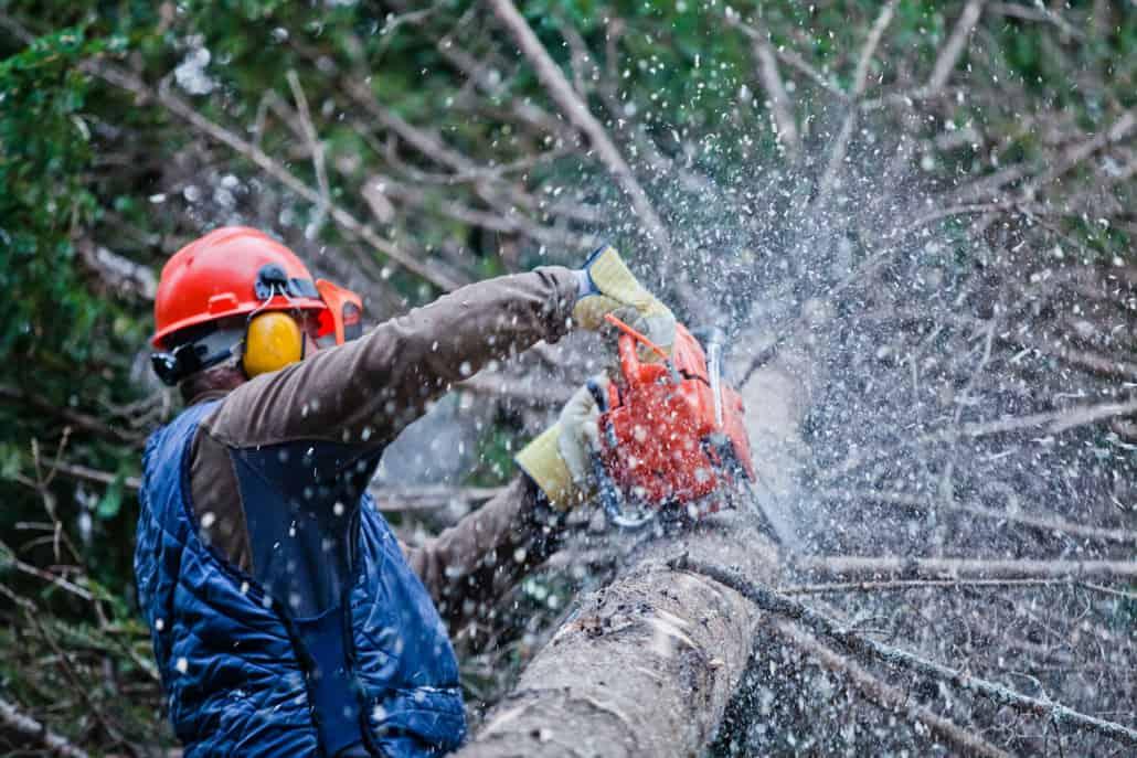professionel træbeskæring af stort træ
