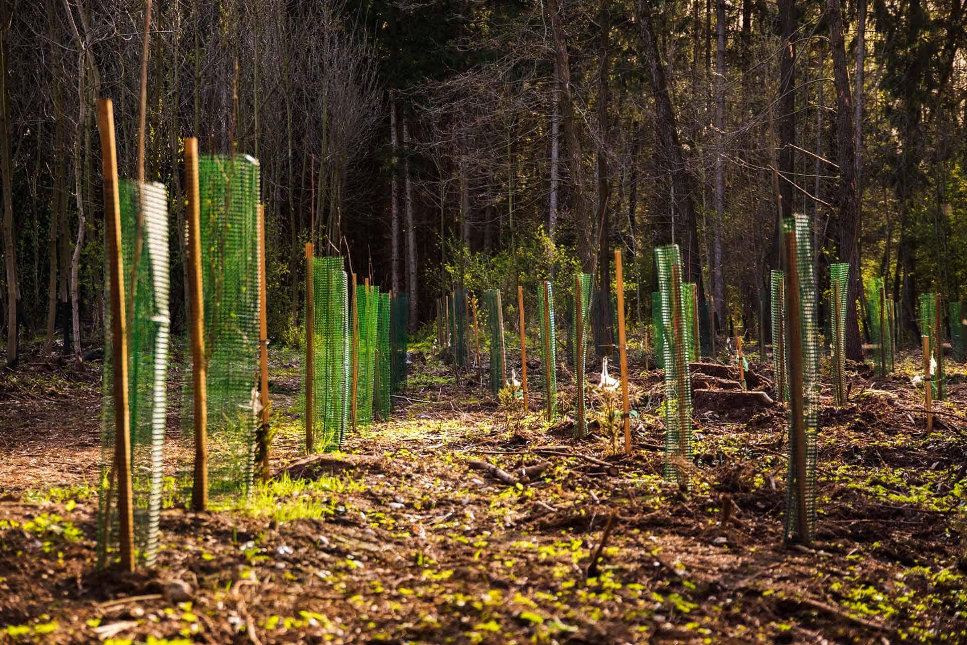 træplantning i skoven