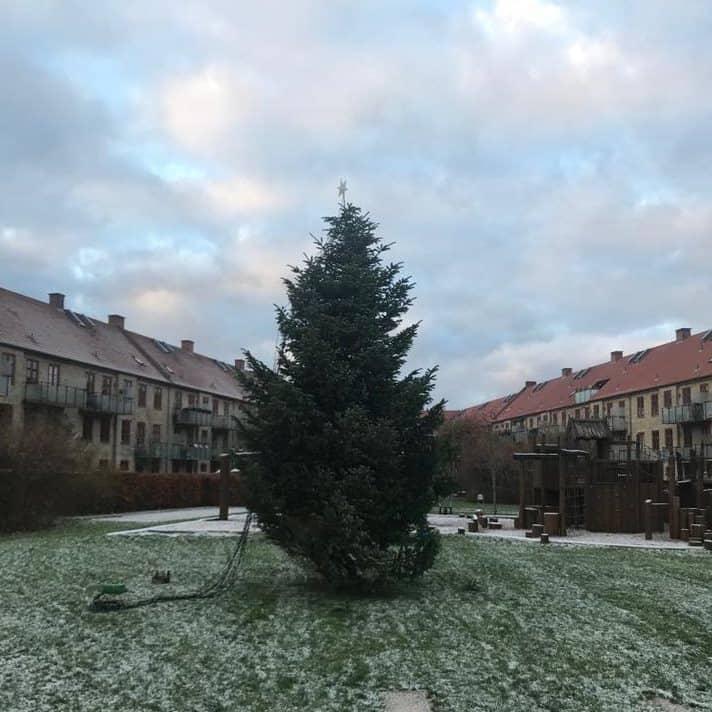 træflytning juletræ